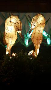 lanternes hypocampes