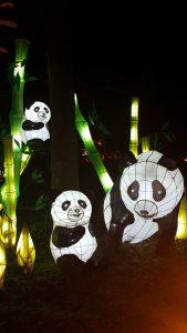jardins de lumière pandas