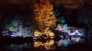 jardins de lumière - jardin du japon