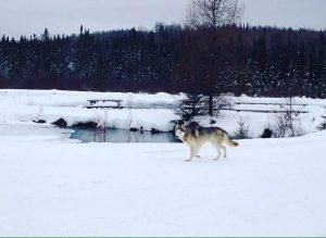 chien dans la neige au bord de l'eau